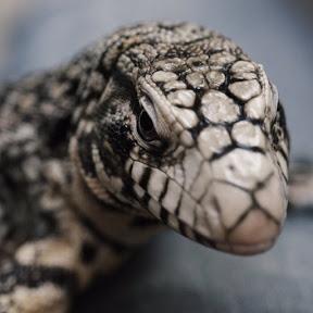 爬虫類 ユーチュー バー